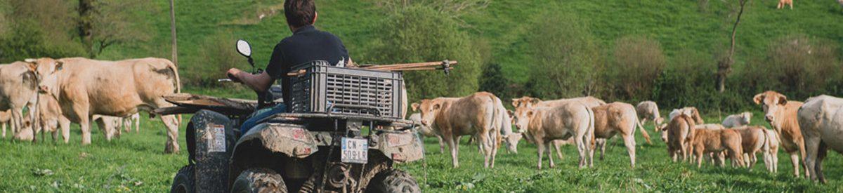 Vente directe de viande de boeuf